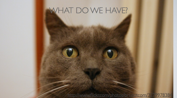 Cat - WHAT DO WE HAVE?